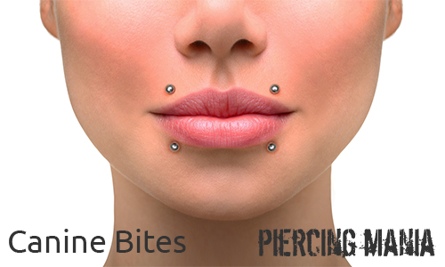 Canine Bites Piercing